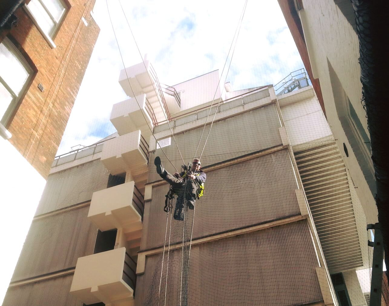 Bird Proofing Amp Removal South East Abseiling